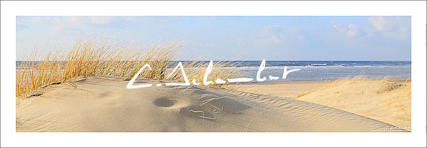 Dunes and beachgrass in winter, panoramic view, Opal Coast, Hauts-de-France, English Channel, France. Photo poster and art print. Image Gallery and picture Christophe Schambert