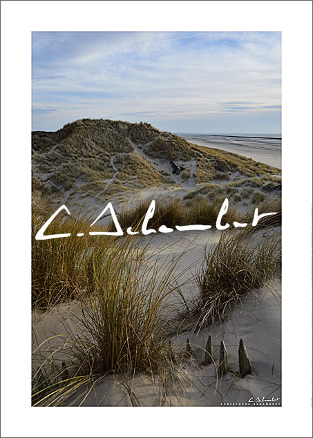 Dunes with beachgrass, ganivelles, beach at low tide, Picardy Coast, Hauts-de-France, France. Photo poster and art print. Image Gallery and picture Christophe Schambert